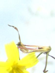 """Fotografie von Heike Stommel mit dem Titel """"Blütengelb"""""""