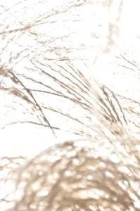 """Fotografie von Heike Stommel mit dem Titel """"Wintergras"""""""