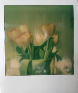 """Fotografie von Heike Stommel mit dem Titel """"Tulpenpolaroid"""""""