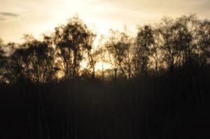 """Fotografie von Heike Stommel mit dem Titel """"Wahner Heide"""""""