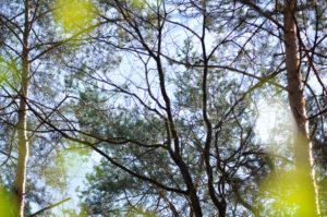"""Fotografie von Heike Stommel mit dem Titel """"Waldfrühjahrsgrün"""""""
